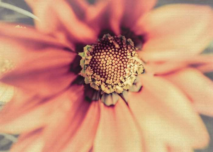 Flower Beauty Greeting Card featuring the photograph Flower Beauty II by Marco Oliveira