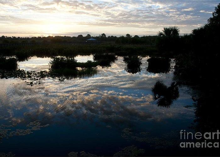 Nature Greeting Card featuring the photograph Green Cay Wetlands, Fl by Mark Newman