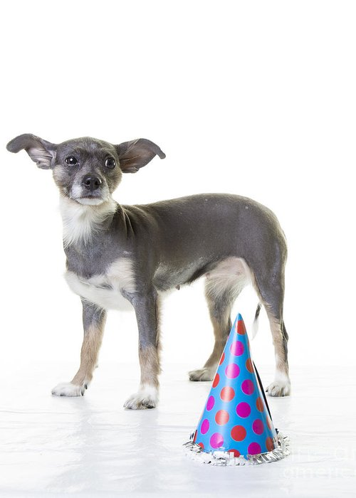 Dog Greeting Card featuring the photograph Happy Birthday by Edward Fielding
