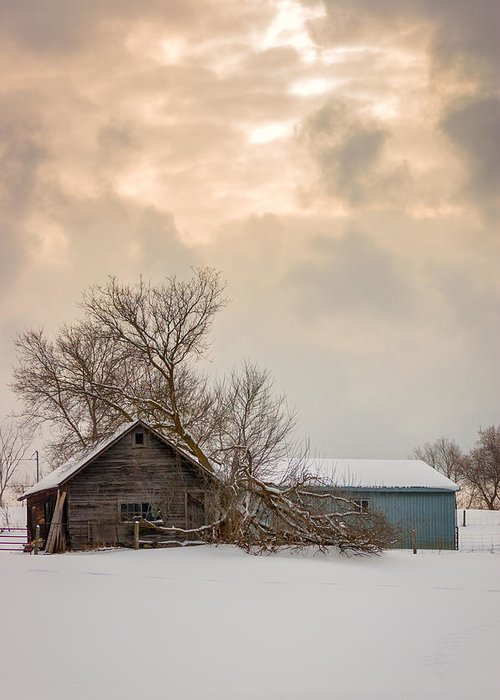 Snow Greeting Card featuring the photograph Loneliness by Steve Harrington