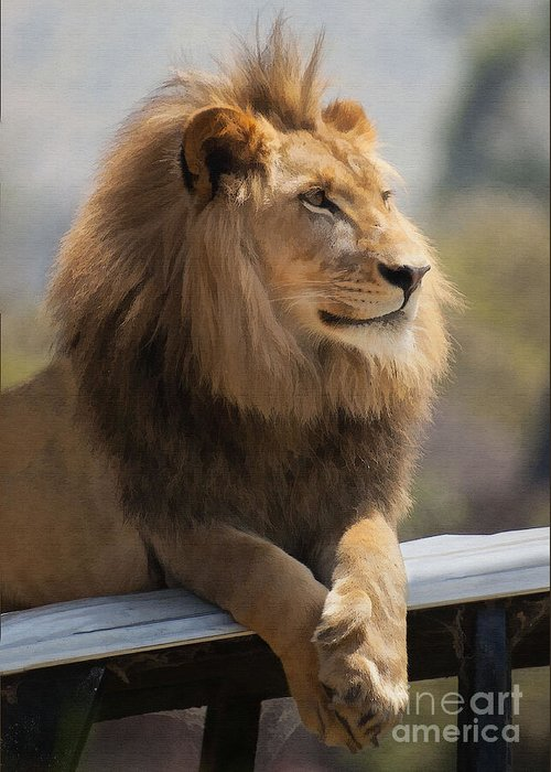 Animal Greeting Card featuring the digital art Majestic Lion by Sharon Foster