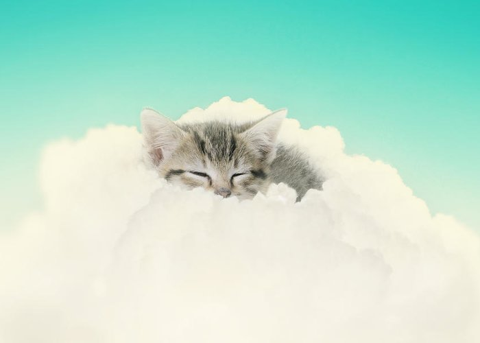 Kitten Greeting Card featuring the photograph On Cloud Nine by Amy Tyler