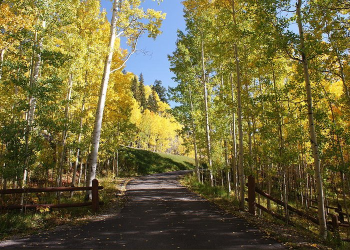 Landscape Greeting Card featuring the photograph Telluride Colorado Fall by Michael J Bauer