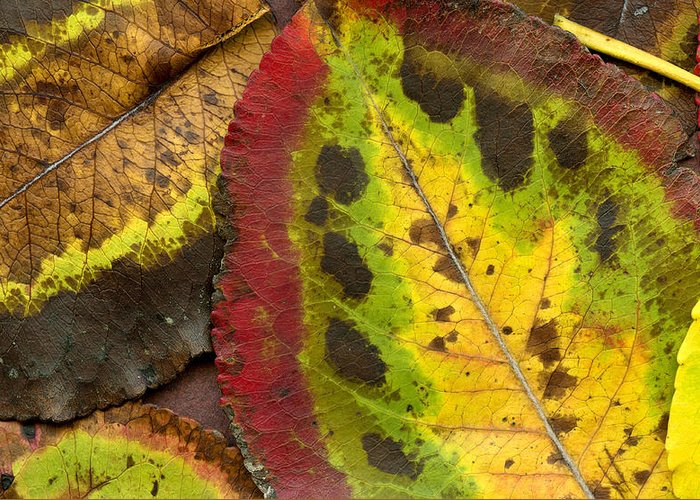 Leaf Greeting Card featuring the photograph Turning Leaves by Stephen Anderson