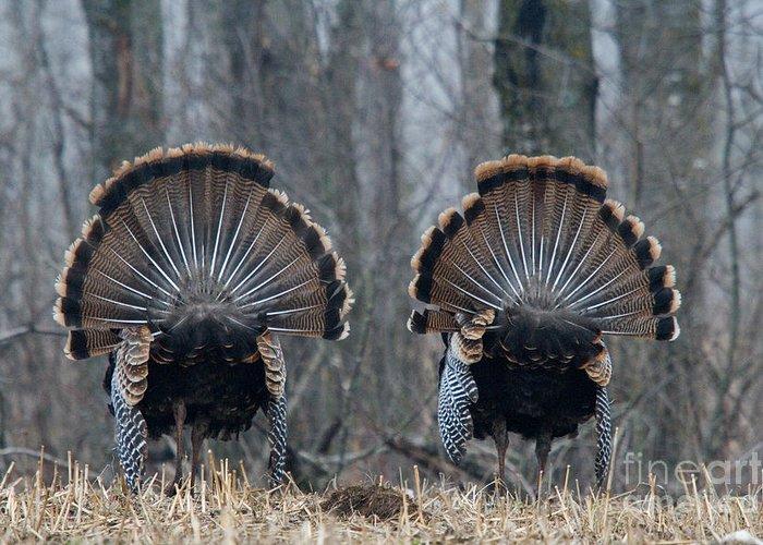 Eastern Wild Turkey Greeting Card featuring the photograph Jake Eastern Wild Turkeys by Linda Freshwaters Arndt
