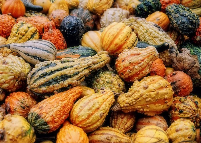Vegetable Greeting Card featuring the photograph Autumn Gourds by Joann Vitali