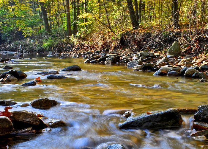 Autumn Greeting Card featuring the photograph Autumn Stream by Frozen in Time Fine Art Photography