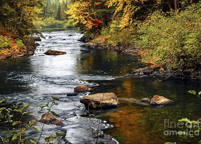 Autumn Greeting Card featuring the photograph Forest River In The Fall by Elena Elisseeva