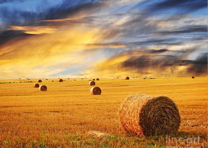 Farm Greeting Card featuring the photograph Golden Sunset Over Farm Field With Hay Bales by Elena Elisseeva
