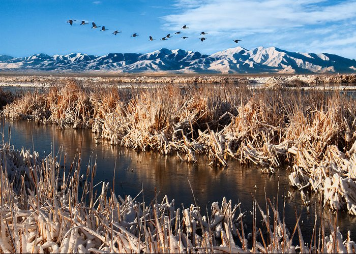 Great Salt Lake Greeting Card featuring the photograph Great Salt Lake Utah by Utah Images