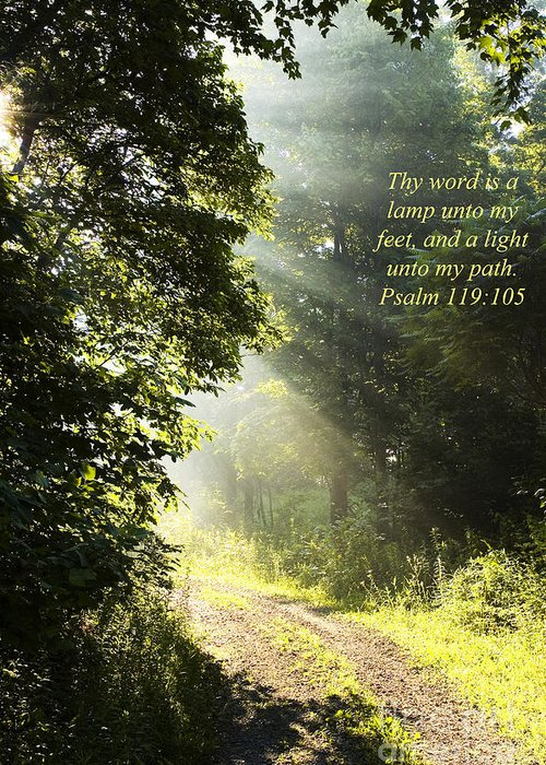 Morning Greeting Card featuring the photograph Light Unto My Path by Thomas R Fletcher