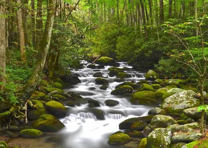 Square Greeting Card featuring the photograph Smoky Mountain Stream by Frozen in Time Fine Art Photography