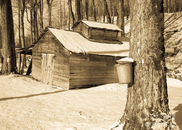Vermont Greeting Card featuring the photograph The Old Sugar Shack by Edward Fielding