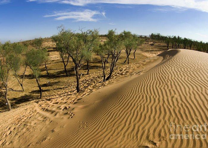 Tamarix Greeting Card featuring the photograph Desert Tamarix Trees by Dan Yeger