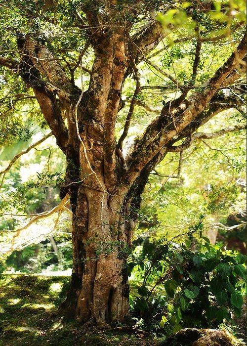 Nature Greeting Card featuring the photograph Kingdom Of The Trees. Peradeniya Botanical Garden. Sri Lanka by Jenny Rainbow