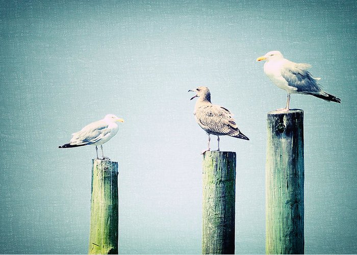 Sea Greeting Card featuring the photograph 3 Seal Gulls by Dick Wood