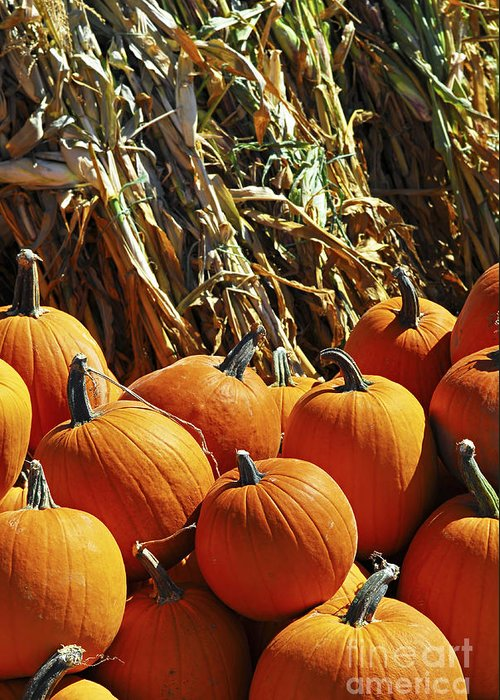 Pumpkin Greeting Card featuring the photograph Pumpkins by Elena Elisseeva
