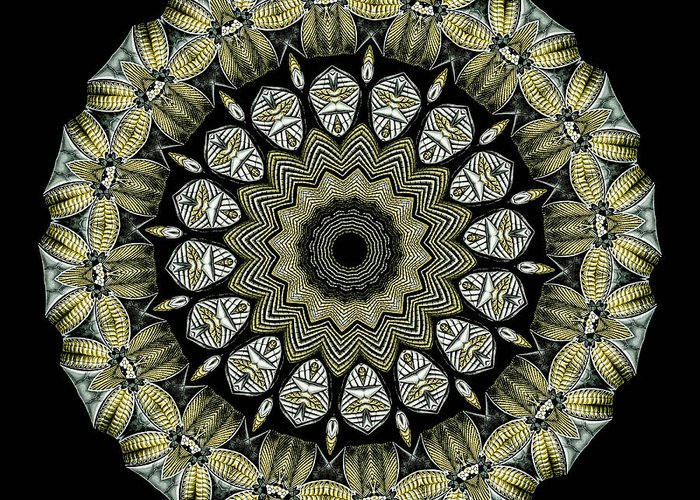 Ernst Haeckel Greeting Card featuring the photograph Kaleidoscope Ernst Haeckl Sea Life Series by Amy Cicconi