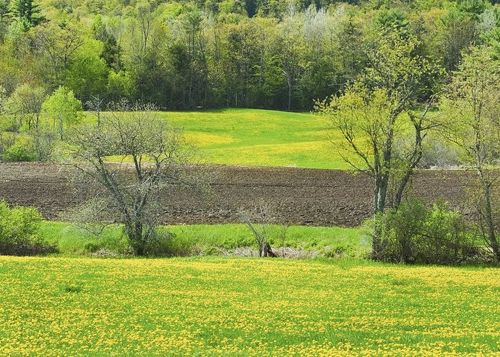 Spring Greeting Card featuring the photograph Spring Farm Landscape With Dandelion Bloom In Maine by Keith Webber Jr