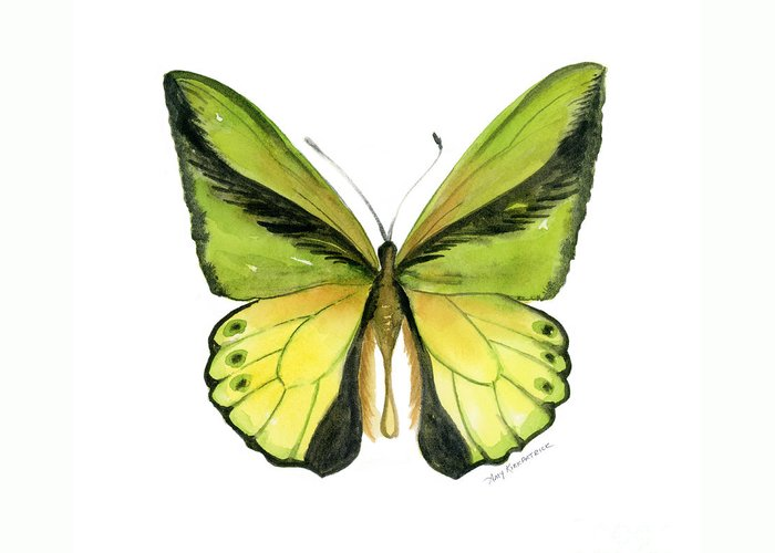 Goliath Butterfly Greeting Card featuring the painting 8 Goliath Birdwing Butterfly by Amy Kirkpatrick