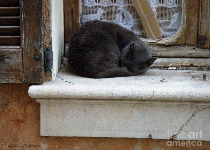 Cat Greeting Card featuring the photograph A Circled Up Cat by Lainie Wrightson