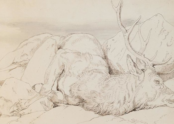 C19th Greeting Card featuring the drawing A Dead Stag by Sir Edwin Landseer