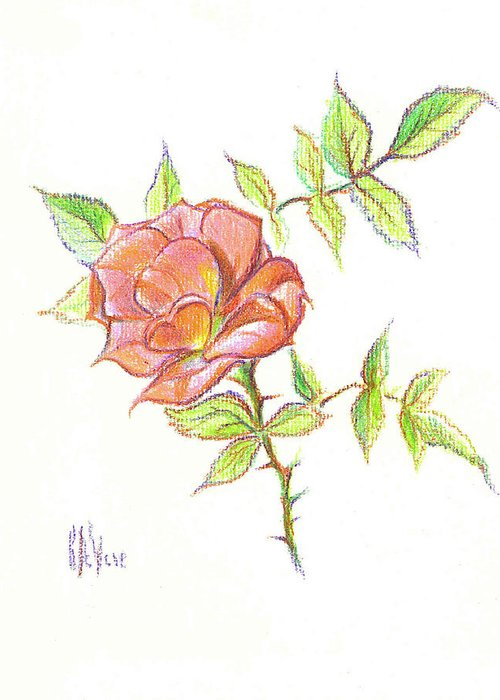 A Rose In Brigadoon Greeting Card featuring the drawing A Rose In Brigadoon by Kip DeVore