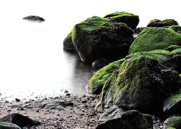 Stepping Stones Park Greeting Card featuring the photograph A Study In Green by JC Findley