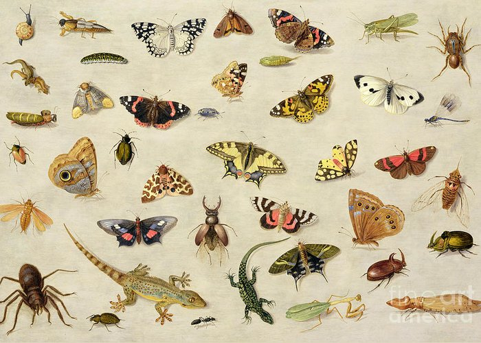 Collection Greeting Card featuring the painting A Study Of Insects by Jan Van Kessel