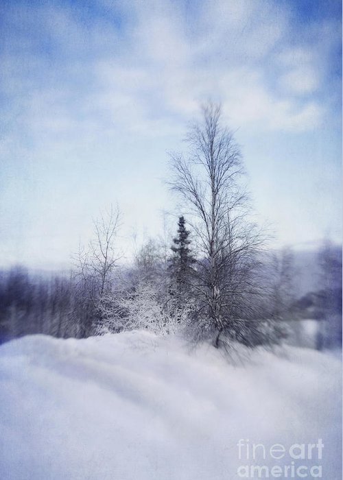 Birch Greeting Card featuring the photograph A Tree In The Cold by Priska Wettstein