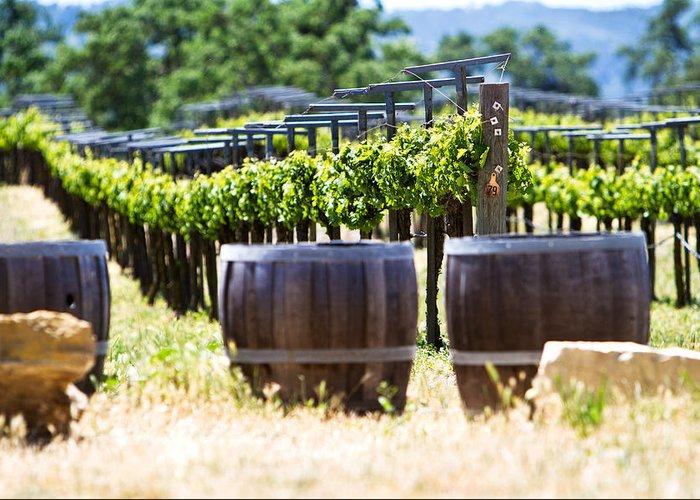 California Greeting Card featuring the photograph A Vineyard With Oak Barrels by Susan Schmitz