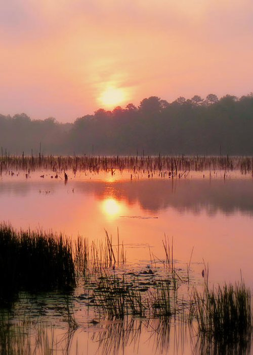 Alabama Greeting Card featuring the photograph A Wetlands Sunrise by JC Findley