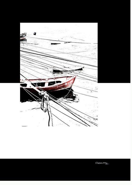 Albatros Greeting Card featuring the digital art Albatros by Xoanxo Cespon