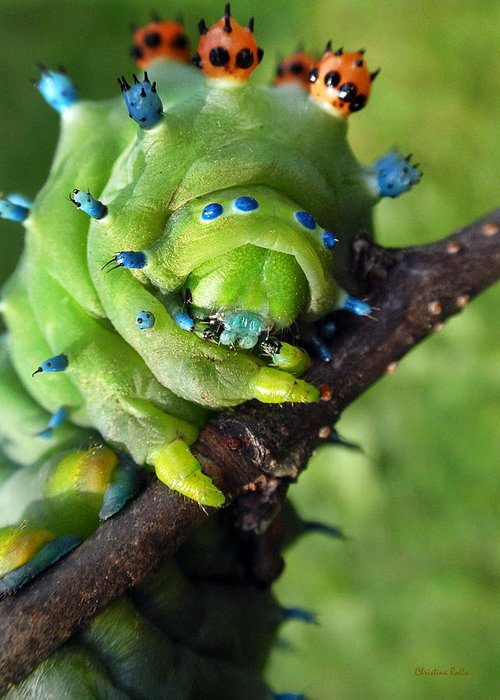 Alien Greeting Card featuring the photograph Alien Nature Cecropia Caterpillar by Christina Rollo