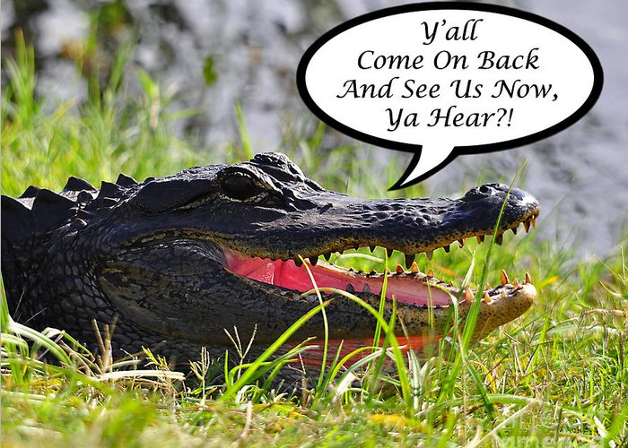Alligator Greeting Card featuring the photograph Alligator Yall Come Back Card by Al Powell Photography USA