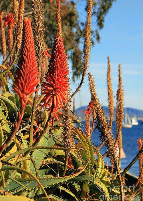Aloe Vera Bloom Greeting Card featuring the photograph Aloe Vera Bloom by Mariola Bitner