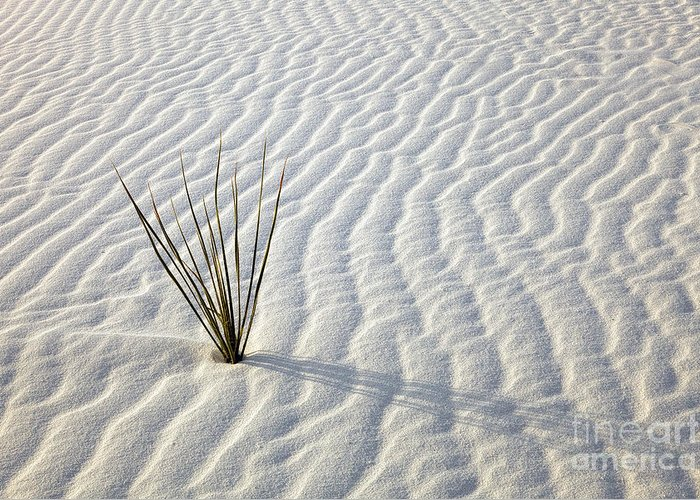 White Sands Greeting Card featuring the photograph Alone In A Sea Of White by Mike Dawson