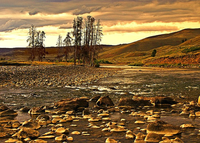 Yellowstone Greeting Card featuring the photograph Along The Larmar River by Marty Koch