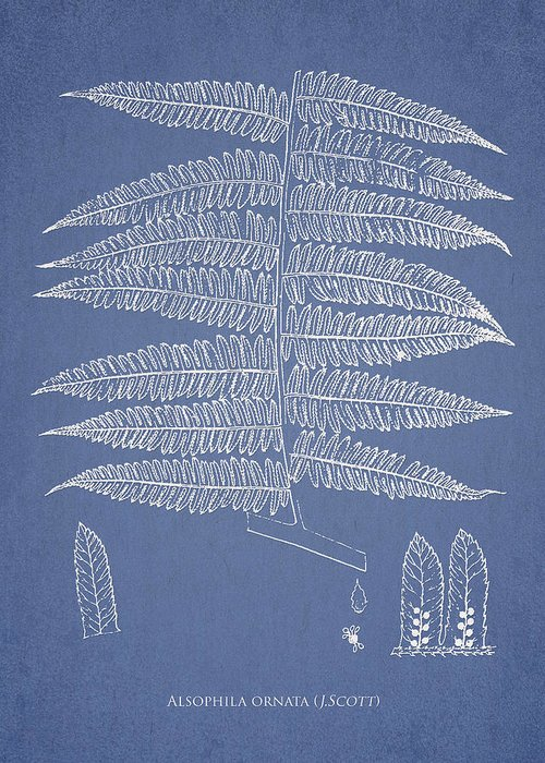 Fern Greeting Card featuring the drawing Alsophila Ornata by Aged Pixel