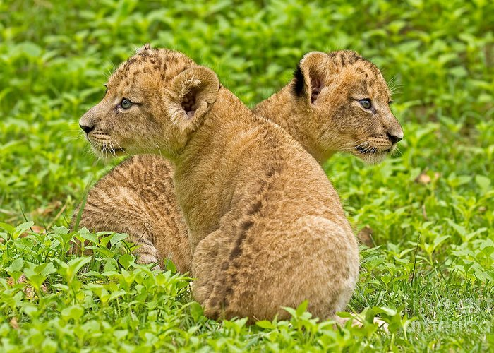 Adorable Greeting Card featuring the photograph Alternative Interests by Ashley Vincent