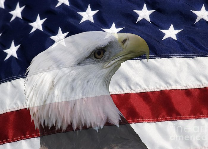 American Greeting Card featuring the photograph American Flag And Bald Eagle by Jill Lang
