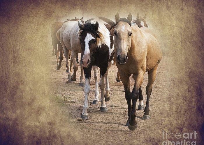 American Quarter Horse Greeting Card featuring the photograph American Quarter Horse Herd by Betty LaRue