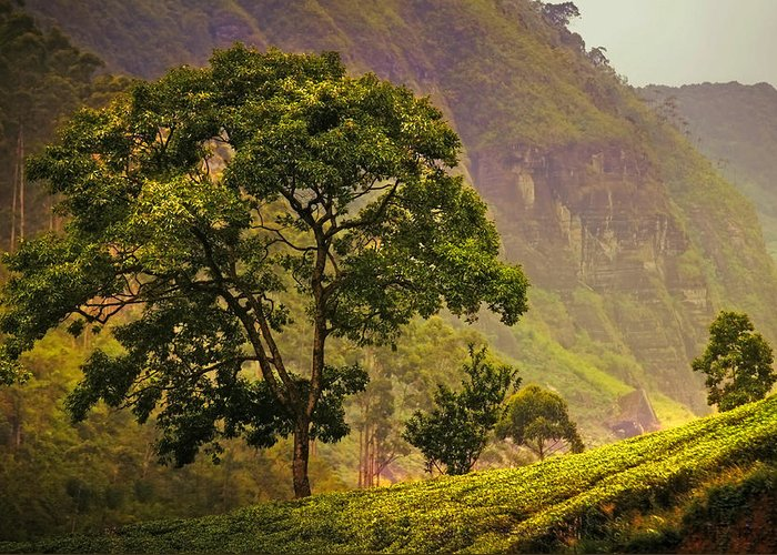 Sri Lanka Greeting Card featuring the photograph Among The Mountains And Tea Plantations. Nuwara Eliya. Sri Lanka by Jenny Rainbow