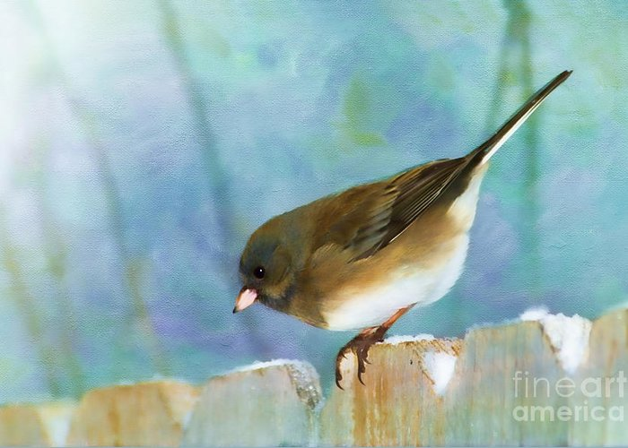 Junco Greeting Card featuring the photograph And Down I Go by Betty LaRue
