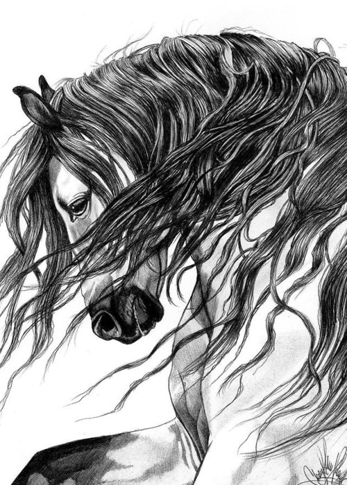 Horse Head Drawing Greeting Card featuring the drawing Andalusian Arabian Head by Cheryl Poland