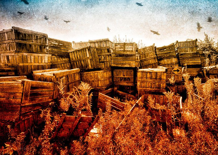 Apple Greeting Card featuring the photograph Apple Crates And Crows by Bob Orsillo