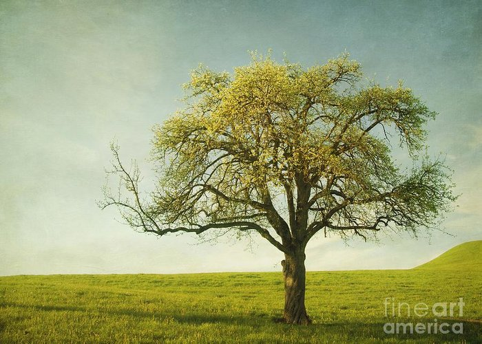 Appletree Greeting Card featuring the photograph Appletree by Priska Wettstein