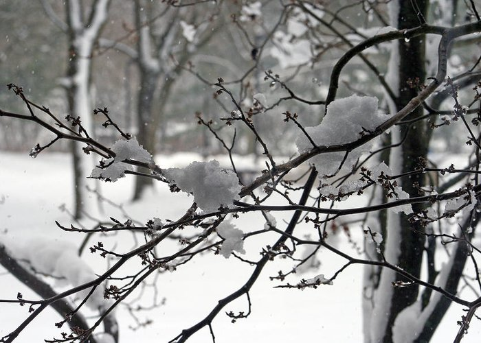 Nature Greeting Card featuring the photograph April Snow by Kay Novy