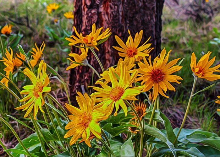 Alpine Greeting Card featuring the painting Arrowleaf Balsamroot by Omaste Witkowski