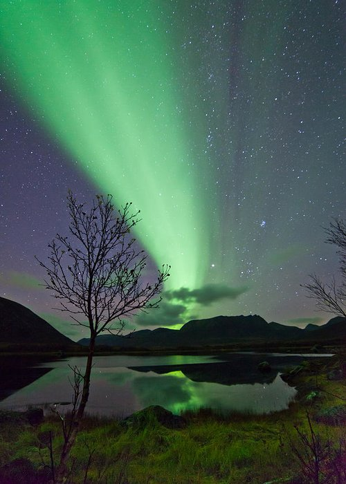Sky Greeting Card featuring the photograph Auroras And Tree by Frank Olsen